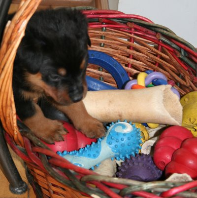 Jackpot!!!  Miss Lavendar finds the toybox first!