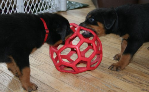 Red Boy & Black Boy play with Iza's favorite Ball!